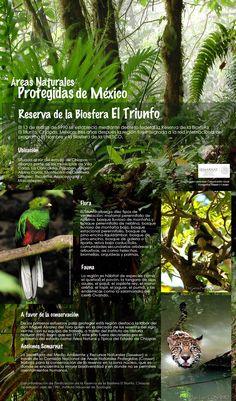 Mexico : El Triunfo, situada al sur del Estado de Chiapas