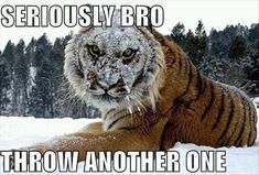 Wow, he looks pissed off !!! Funny Animal Pictures – 60 Pics
