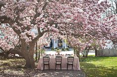 This is supposed to be great in late April into May: The garden's magnolia tree inspired this pink-themed photo shoot at Linden Place Mansion. Tree Wedding, Wedding Flowers, Wedding Table, Linden Place, Cherry Blossom Wedding, Cherry Blossoms, Flowering Cherry Tree, Magnolia Wedding, Photoshoot Themes