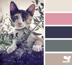 color prowl