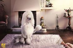 Perfume poodle - Incredible Photo #Manipulation works based #Adobe #Photoshop found at www.webneel.com pinned by www.BlickeDeeler.de