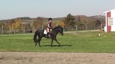 Cazenovia Equestrian Center is located at 3676 Erieville Road, Erieville New York. The Center does offer boarding.