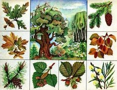 Autumn Activities For Kids, Kids Learning Activities, Science For Kids, Infant Activities, Science And Nature, Flash Card Template, Teaching Plants, Fruit Flowers, Paper Flowers Craft