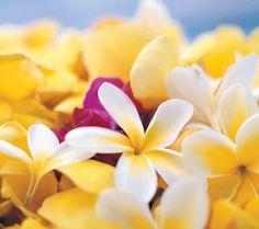 Rapa Nui flowers