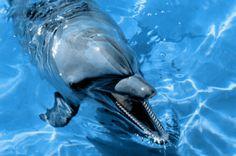 Dolphins - Sea World Gold Coast Queensland Beneath The Sea, Under The Sea, Cancun Attractions, Gold Coast Theme Parks, Gold Coast Queensland, Wild Waters, Delphine, Deep Blue Sea, Underwater World