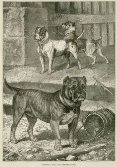 This is a fine antique engraving printed circa 1885