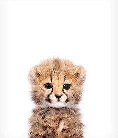 Baby Gepard Print Safari Kindergarten Kunst Baby Tier Wandkunst die Krone Dru B… Baby Cheetah Print Safari Kinderzimmer Kunst Tierbaby Wandkunst The Crown Dru Baby [. Safari Nursery, Animal Nursery, Wallpaper Harry Potter, Baby Cheetahs, Nursery Artwork, Nursery Decor, Baby Wall Art, Art Mural, Art Art