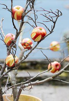 Goed om te weten. Als de appels al aangesneden zijn eten vogels er eerder van. Staat nog leuk ook (tot het bruin wordt dan nl)