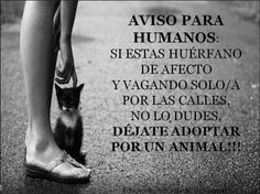 Adopta un animal.