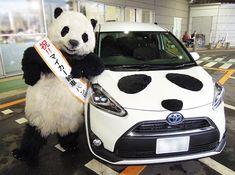 Cute Panda Baby, Baby Panda Bears, Panda Love, Baby Pandas, Panda Panda, Panda Outfit, Panda Images, Teddy Bear Cartoon, Cute Kittens