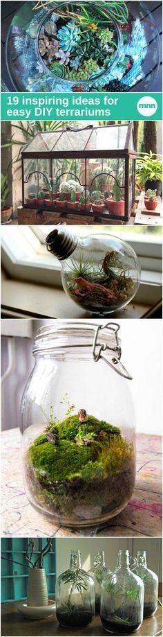 Terrariums are inexpensive and simple to assemble. With proper care, some terrariums can last for years or even decades.