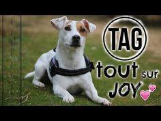 TAG │tout sur Joy ! - YouTube