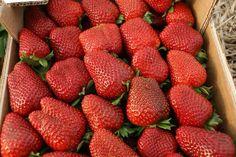 #maduixes #fresas #maduixesborrell #fresasborrell #events #casament #bodas #fiestas #festes #lescora #xiringuito #chiringuito #basenauticapineda #pinedademar #platja #playa #beach #mojitos #food #menjar #chillout #relax