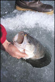 Ice Fishing Walleye Lures - In-Fisherman