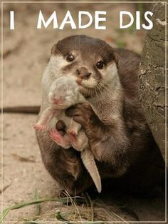 Otter and baby! I made dis; so adorable!!