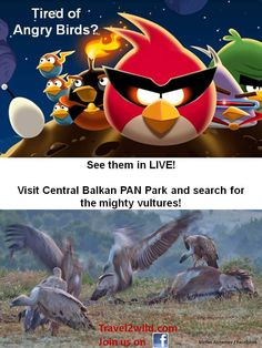 Angry birds?! See the real ones!