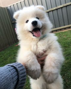 Things that make you go AWW! Like puppies, bunnies, babies, and so on. A place for really cute pictures and videos! Cute Baby Dogs, Cute Dogs And Puppies, Adorable Puppies, Doggies, Samoyed Dogs, Vizsla Puppies, Cute Kittens, Fluffy Dogs, Cute Little Animals