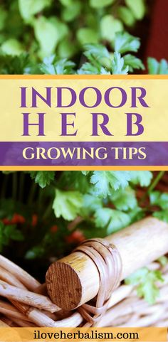 The herbs are growing so fast that you will be able to use them in a matter of weeks! Today I would love to share this great article on how to grow herbs indoors. Container Herb Garden, Diy Herb Garden, Herbs Garden, Smart Garden, Garden Ideas, Hydroponic Gardening, Organic Gardening, Indoor Gardening, Indoor Herbs