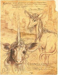 The Karkadam, from Magnalucius's notebook.