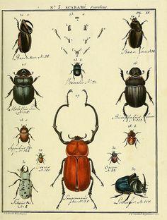 Entomologie, ou, Histoire naturelle des insectes :.  A Paris :De l'Imprimerie de Baudoin,1789-1808  by BioDivLibrary, via Flickr