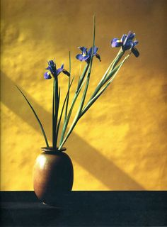 #Mapplethorpe #flowers