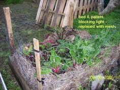 Easy organic garden any where - the NO DIG GARDEN What is a No dig garden? A simple, easy and great way to grow your food!! The No Dig Garden is essentially a great big compost heap containing all the things that plants like best, arranged in layers just like big lasagna.