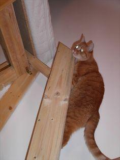 Kater Feli geht zu Bett Animals, Maine Coon Cats, Arts And Crafts, Bed, Animales, Animaux, Animal, Animais