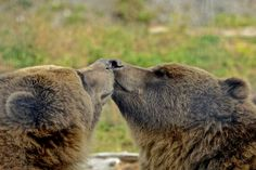 Nose to Nose Photo by Jack Borno -- National Geographic Your Shot