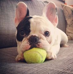 He also plays tennis but he isnt very good at it. (He eats the ball)