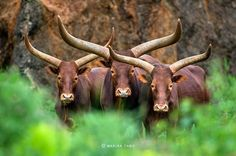 Amazing Wildlife Photography by Marina Cano