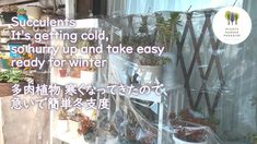 多肉植物 寒くなってきたので急いで簡単冬支度 SucculentsIts getting cold so hurry up and take easy ready for winter[Vlog] - YouTube Paradise Garden, Succulent Care, Planting Succulents, Cold, Winter, Youtube, Plants, Winter Time, Plant