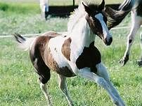 types of horses - Yahoo Image Search Results