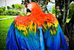Do you think this Macaw is showing off