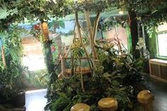 rain forest room - Google Search