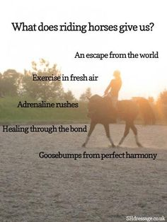 This is all true. I want a horse. Or at least to take lessons again:/