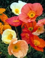 Blog post at PragmaticMom : Art Project for Kids: Emil Nolde Poppies Emil Nolde is one of my favorite artists that paints flowers. I especially love his delicate yet l[..]