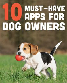 From mapping your dog walk to pet first aid, a list of great apps for dog owners.