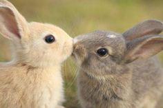 bunnies kissing!