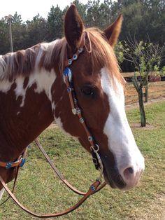 #paint #horse
