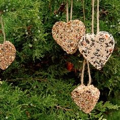 Attract birds to your yard in winter by making and hanging bird seed cakes -- we used heart-shaped cookie cutters just for fun. Instructions at our website.