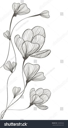 Find flower line drawing stock images in HD and millions of other royalty-free stock photos, illustrations and vectors in the Shutterstock collection. Line Art Flowers, Flower Line Drawings, Flower Drawing Tutorials, Botanical Line Drawing, Flower Sketches, Floral Drawing, Art Drawings Sketches, Easy Drawings, Flower Art Drawing