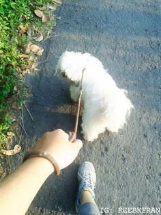 Hey buddy!! with Domba aka Cocola. Shih Tzu dog