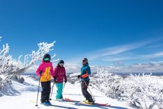 Perisher Ski Resort (@PerisherResort) | Twitter Australia Tourism, Tour Guide, Mount Everest, Skiing, Tours, Mountains, Twitter, Travel, Ski