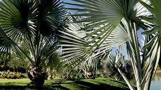 O Jardim Botânico Inhotim (JBI) mantém, propaga e propicia estudos com as espécies botânicas de seu acervo de aproximadamente 5.000 espécies.