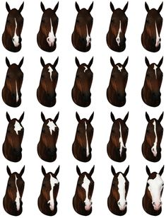 20 face markings - by Raymond Equestrian Centre