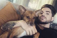 "ADAM LAMBERT on IG: ""I can't stop posting my rockstar #dog #Pharaoh"