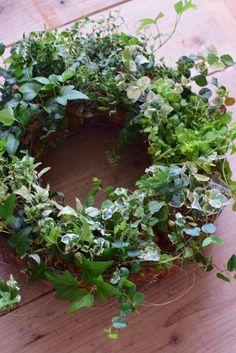 アイビーのグリーンリース(寄せ植え) Interior Garden, Container Gardening, Outdoor Spaces, Greenery, Flower Arrangements, Christmas Wreaths, Floral Wreath, Table Settings, Flowers