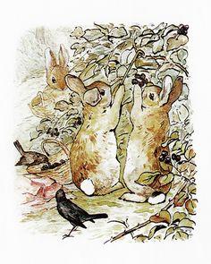 Three Bunnies Gather Blackberries by Beatrix Potter | Art Posters
