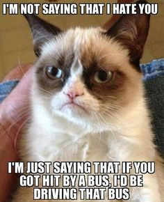 Grumpy Cat Hates You