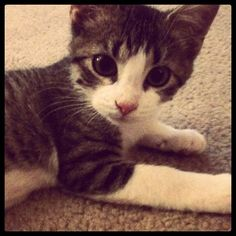 Olive is the Cutest kitten ever! #kitten #Olive